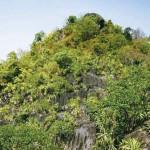 Doi Pha Klong